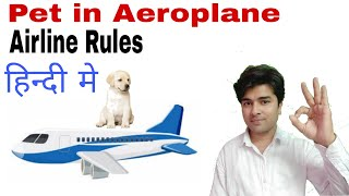 How to Travel with Pets in Aeroplane