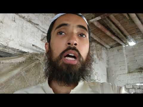 Golden Misri Murgion ka business in Pakistan - pak 007 - Video