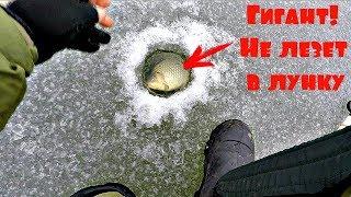 Это капец! Караси не пролазят в 150 лунку! Зимняя рыбалка с Михалычем!