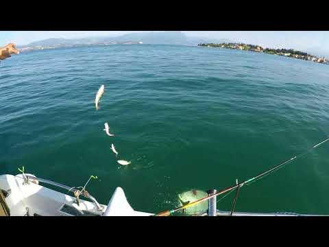 La pesca diffondendosi una corrente un galleggiante