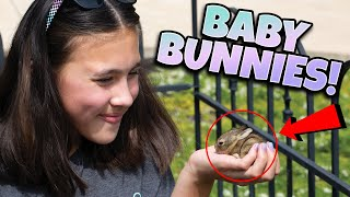 OUR CUTEST VIDEO EVER!!! We Found Baby Bunnies In Our Garden!