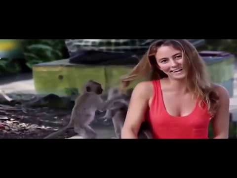 Monkeys Attack The Beautiful Girls Funny Compilation  Funny Vines Fa