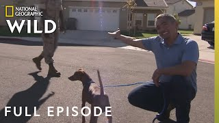 Year of the Dog (Full Episode) | Dog Whisperer with Cesar Millan