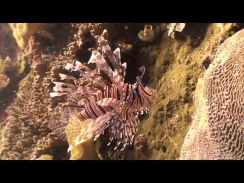 Raja Ampat & Banda Sea