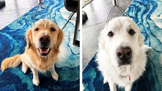 DOGS TRY HEAD SCRATCHER FOR THE FIRST TIME - Super Cooper Sunday #179