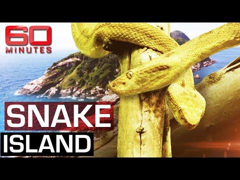 Snake Island: The Most Dangerous Spot on Earth