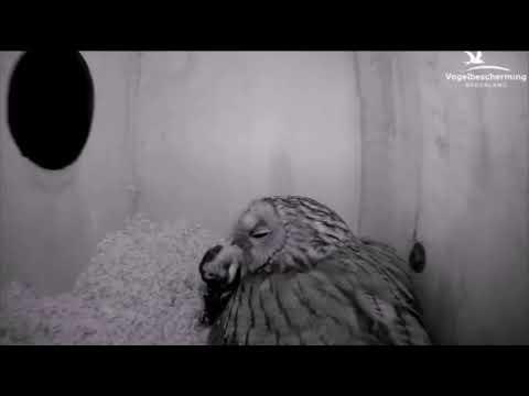 01.04.18 (Vogel als prooi)