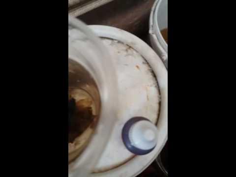 Video Cara Menyembuhkan Ikan Cupang