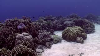 Coral reef at Alegria Dive Resort