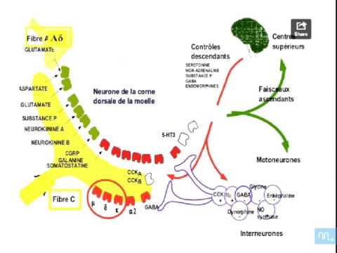 Code CIM 10 hypertension juvénile