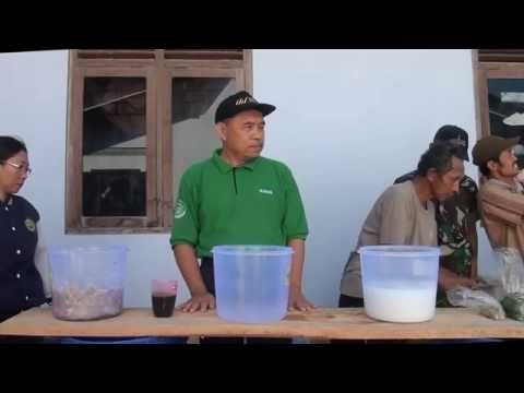 """Video """"PUPUK ORGANIK CAIR DARI BUAH MAJA"""". Liputan, produksi GrabagTV"""