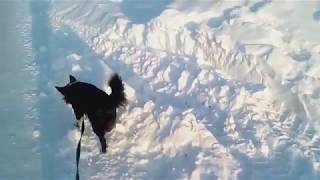 Первая видео съёмка Юрия . Прогулка с Баксом.