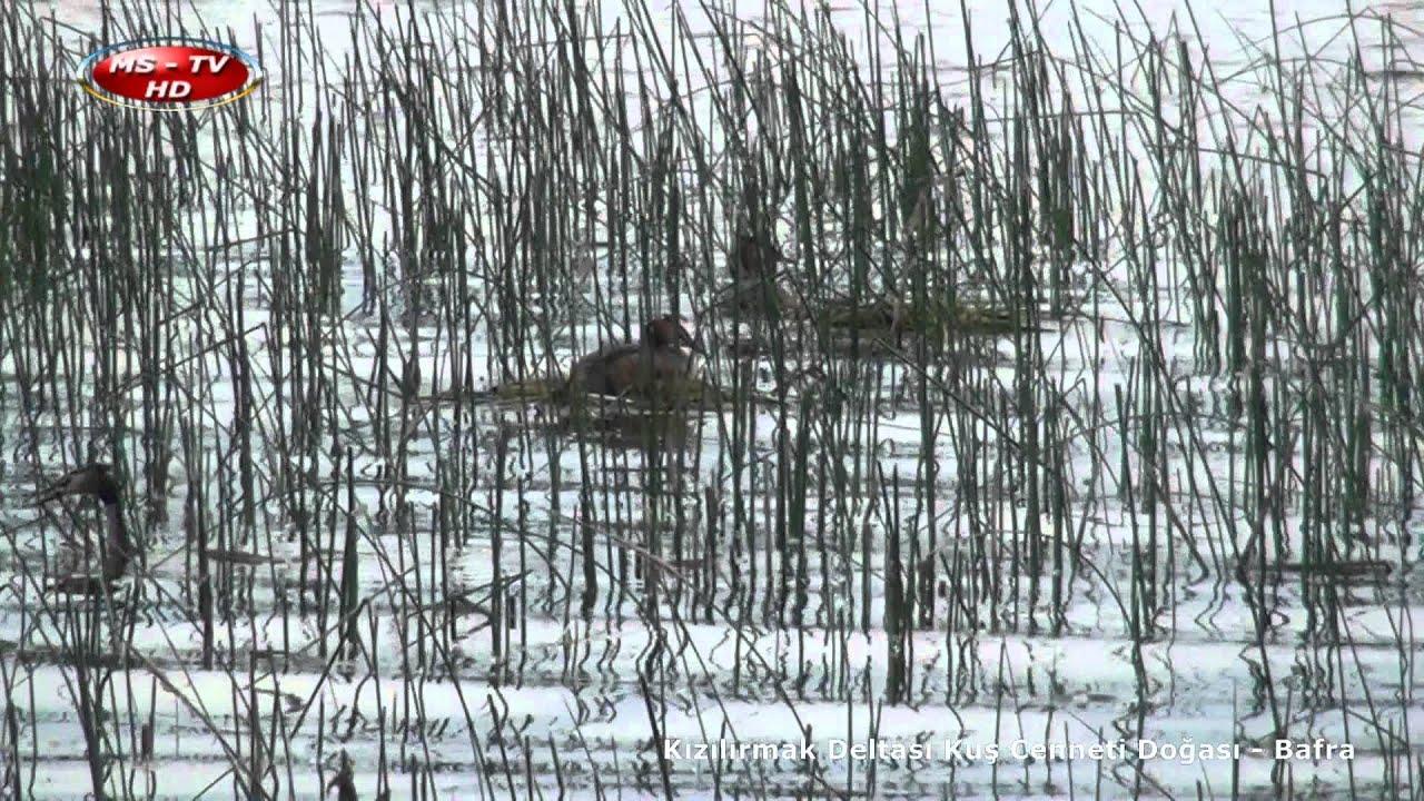 Kızılırmak Deltası Kuş Cenneti Doğası