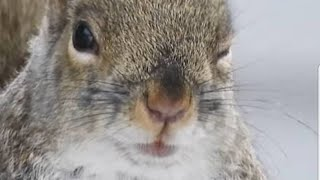 10 Hour Addicting Video For Cats and Dogs - With Squirrels and Chipmunks - Leave On For Pets