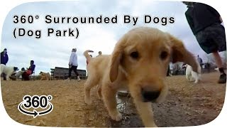 360° Surrounded By Dogs (dog park)