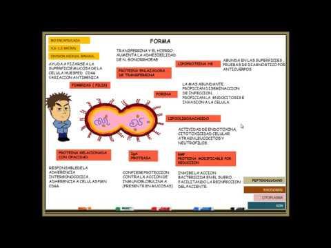 Papilloma virus maschio