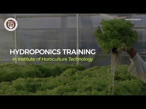 Hydroponic training in Institute of Horticulture Technology ... - YouTube