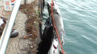 preview picture of video 'Fishing Port Huron Michigan'