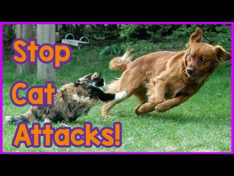 How to Stop Your Cat Attacking Your Dog! Tips On How to Stop Your Cat Being Aggressive to Your Dog!