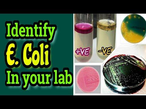 coli férfiaknál a péniszben)