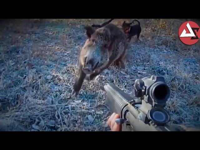 Wild Hog Attacks Compilation