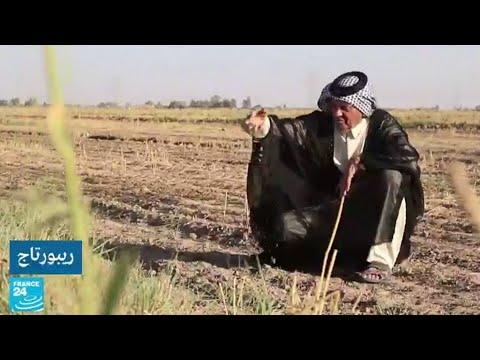 العرب اليوم - شاهد: مزارعون عراقيون يُحذِّرون من اختفاء أرز