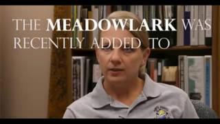 Western Meadowlark Bird Kansas state Bird