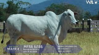 6286 mafra