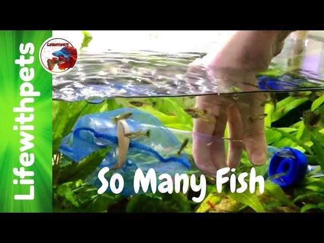 So Many Fish!