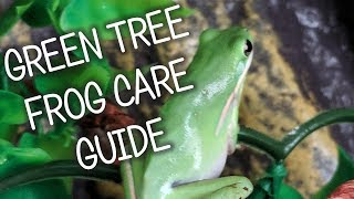 Green Tree Frog Care, Diet, And Tank Set Up