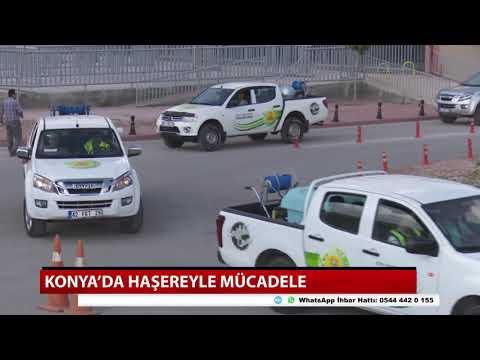 Konya'da haşereyle mücadele