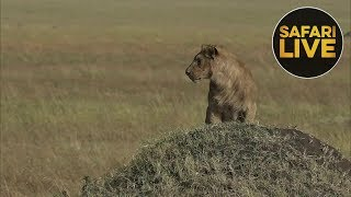 safariLIVE - Sunrise Safari - August 7, 2018
