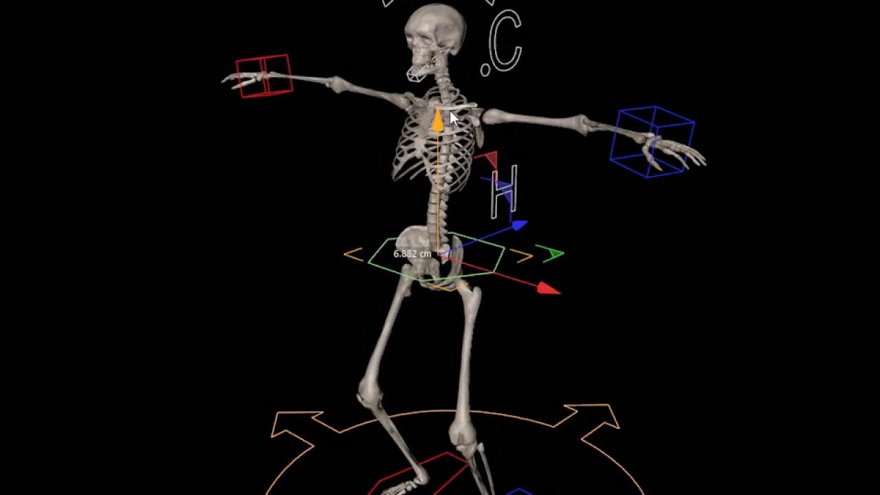 3D skeleton character