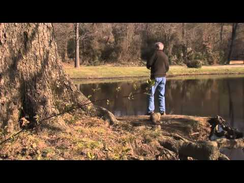 Bass Fishing for Beginners: The Pond