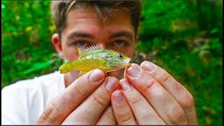 Micro Fishing HIDDEN Backwoods Stream -- Homecoming Tour Pt. 2