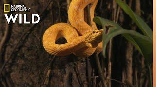 Snake v. Bat | World's Deadliest
