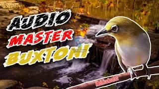 Audio Master Pleci Buxtoni Vol.1