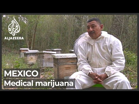 Mexico: Rural communities lobby for cannabis legalisation