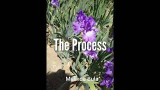 The Process Of Building The Iris Quilt By Melinda Bula