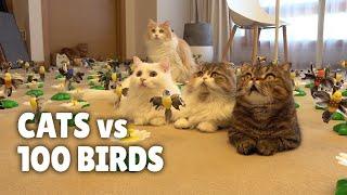Cats vs 100 Birds