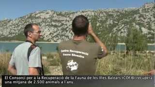 preview picture of video 'Recuperació de la fauna silvestre'