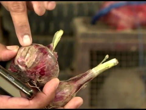 Worms tulad giardia mangyari at kung paano kilalanin