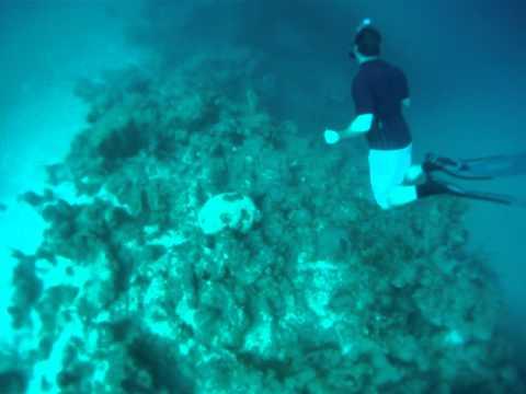 Free dive Cuba Holguin part1