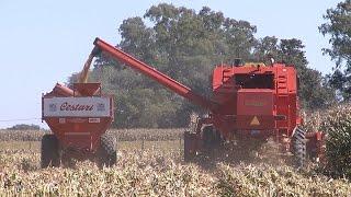 CORN - Los productores trabajan junto al INTA para aumentar la eficiencia en el cosecha del maíz