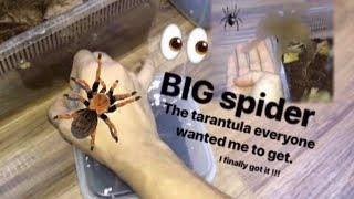 That TARANTULA everyone wanted me to get ~ I FINALLY GOT IT !!!