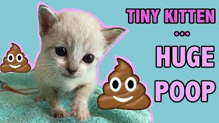Tiny Constipated Kitten Gets an Enema...and Has a HUGE POOP!
