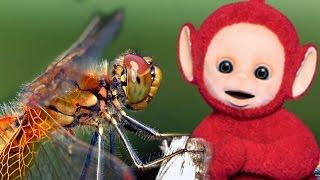 Teletubbies | Dragonflies | 354 | Cartoons For Children
