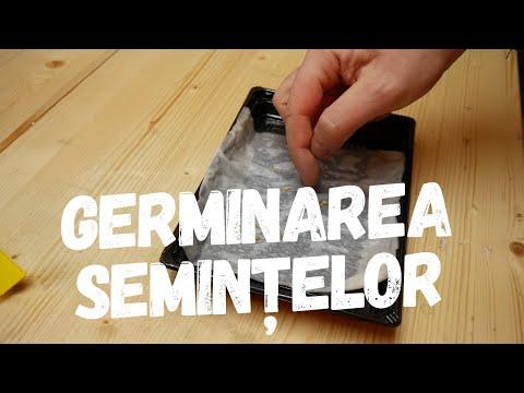 Identificarea verucilor genitale