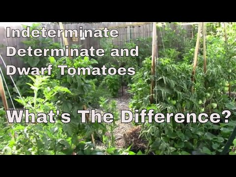, title : 'The Difference Between Indeterminate, Determinate, and Dwarf Tomatoes