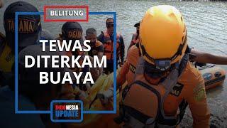 Tengah Bersihkan Timah, Warga di Belitung Ini Tewas Setelah Diterkam Buaya 4 Meter